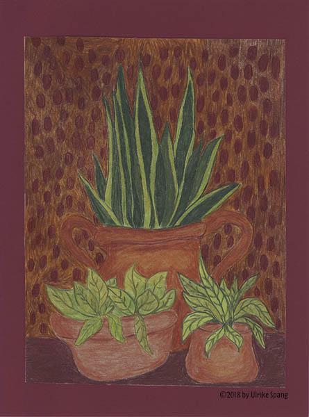 ulrike spang illustration zimmerpflanzen, bogenhanf