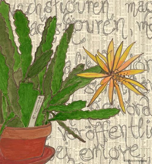 ulrike spang illustration blattkaktus