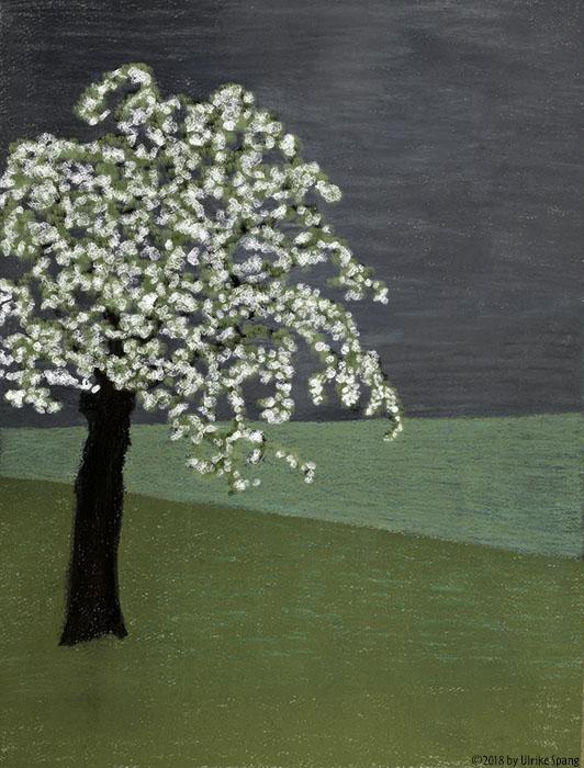 ulrike spang illustration apfelbaum