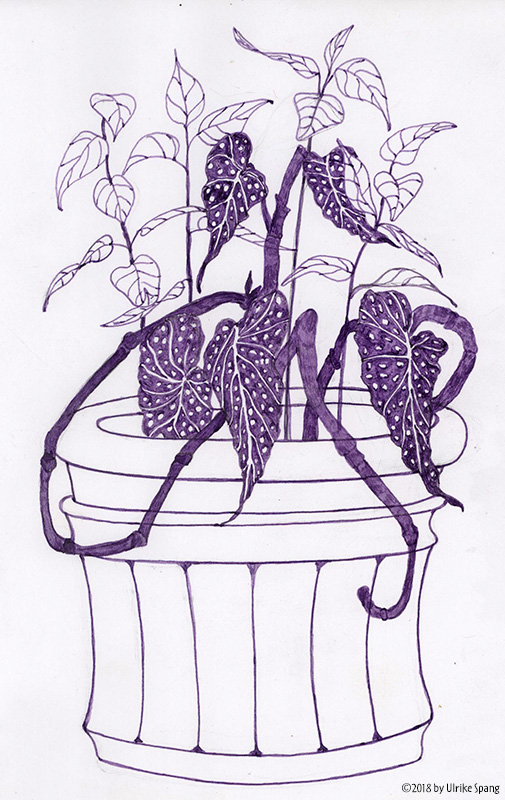 ulrike spang illustration  ulli verlag